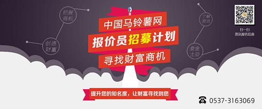中国马铃薯网招募产区报价员