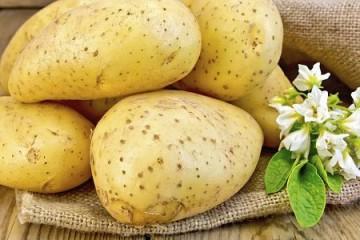 土豆切开不变黑是转基因土豆吗? ()