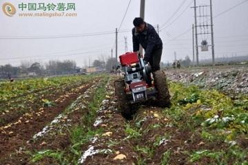 滕州洪绪镇:雨雪来临 党员助农抢收马铃薯