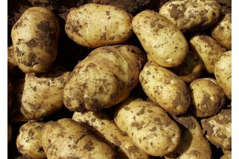 围场土豆代收 ()