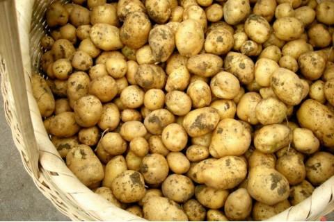 求购50吨小土豆 ()