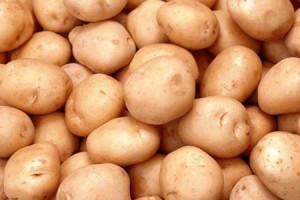 滕州市铃丰马铃薯种业有限责任公司 ()