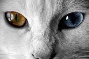 世界上真存在阴阳眼的人吗?