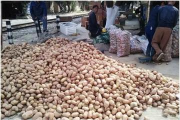 弥勒市巡检司镇6500余亩冬早熟马铃薯助民增收 ()