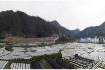 贵州罗悃镇:早春蔬菜种植繁忙 ()