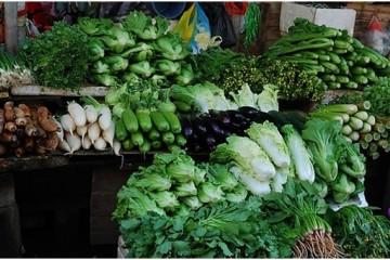 哈尔滨:蔬菜价格呈季节性下降趋势 ()