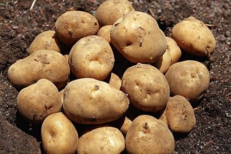 马铃薯 (0)