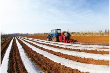山东蓬莱:马铃薯机械化播种正当时 ()