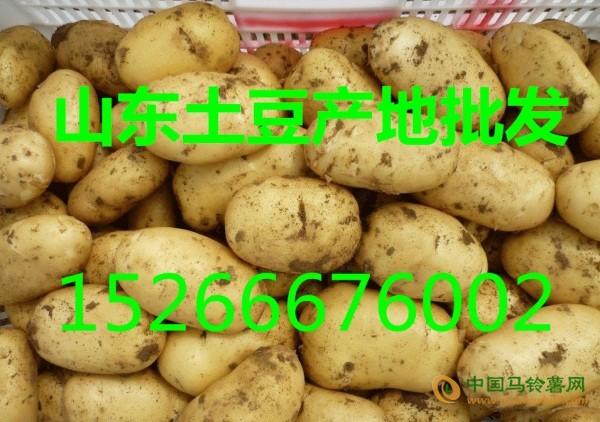 山东土豆价格行情 ()