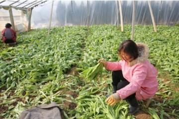 宝鸡市:新建蔬菜5000亩 ()