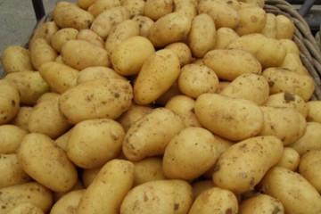 绥化市:望奎龙薯联社小土豆助农增收 ()