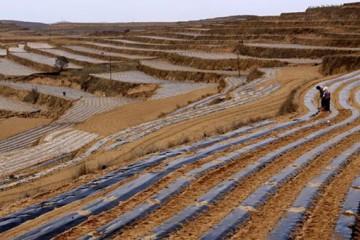 甘肃定西:春种马铃薯种植忙 ()