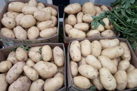 土豆 (0)