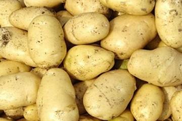 临淄:新土豆少量上市 价格小幅走高 ()