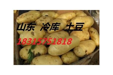 山东土豆价格18315751818 (0)