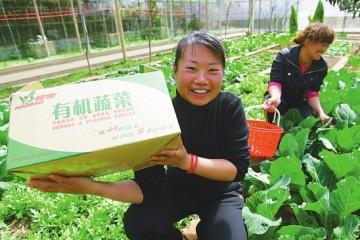 新疆有机蔬菜下月入香港销售 ()