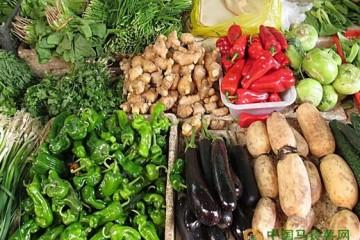 重庆合川:本地蔬菜上市 量大价低 ()