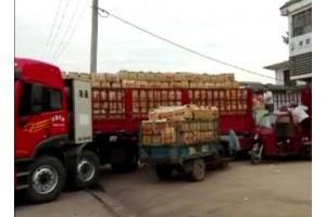 大量供应荷兰土豆