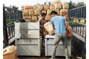 滕州丰荣农业大量供应荷兰十五土豆