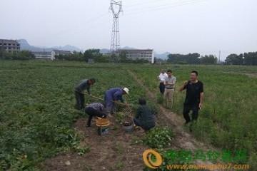 台州市:马铃薯新品种验收会成功召开 ()