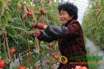 河南内黄县果蔬是此案产地直供 ()