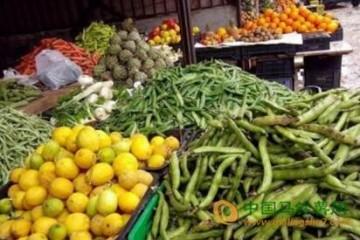 西安:蔬菜量大价低 ()