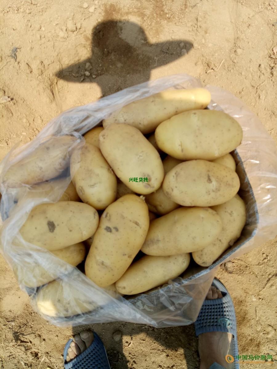 本人大量收土豆 ()