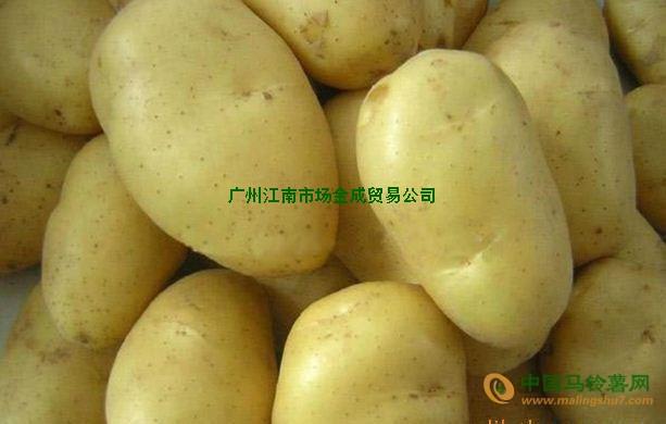 马铃薯 ()