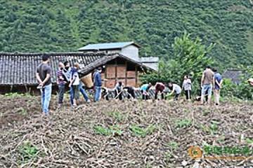 四川凉山:新品种马铃薯喜获丰收 ()