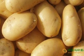 山东胶州:马铃薯品牌质量评选活动成功开展