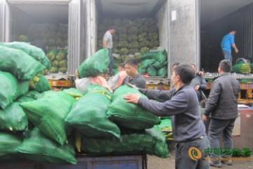山西太原:批发市场时令蔬菜俏销