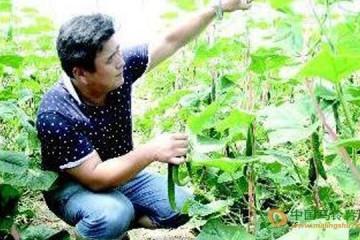 山东聊城:蔬菜大棚助农增收