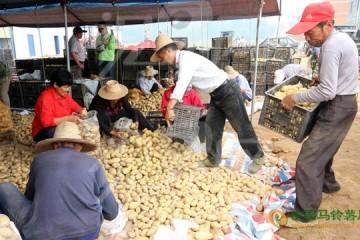 贵州威宁马铃薯助农增收