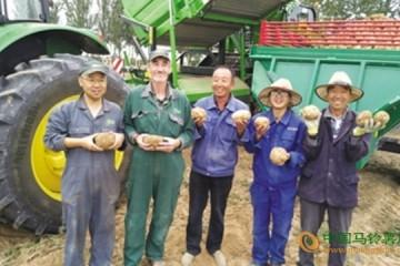 宁夏旺四滩村土豆走向国际
