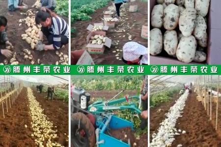 滕州丰荣农业