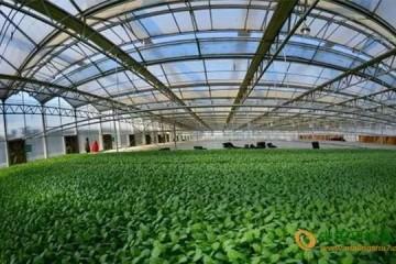 河南新野县:蔬菜产业带动全县经济发展 ()