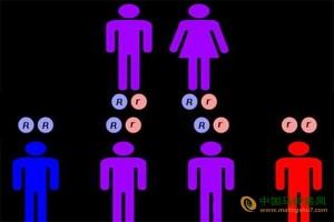 最新发现:朋友间有相同的基因! ()