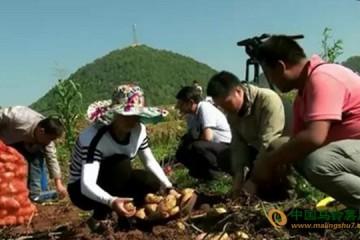 贵州威宁:土豆新品种亩增产800公斤 ()