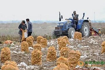 新疆新土豆上市 交易可持续到明年春