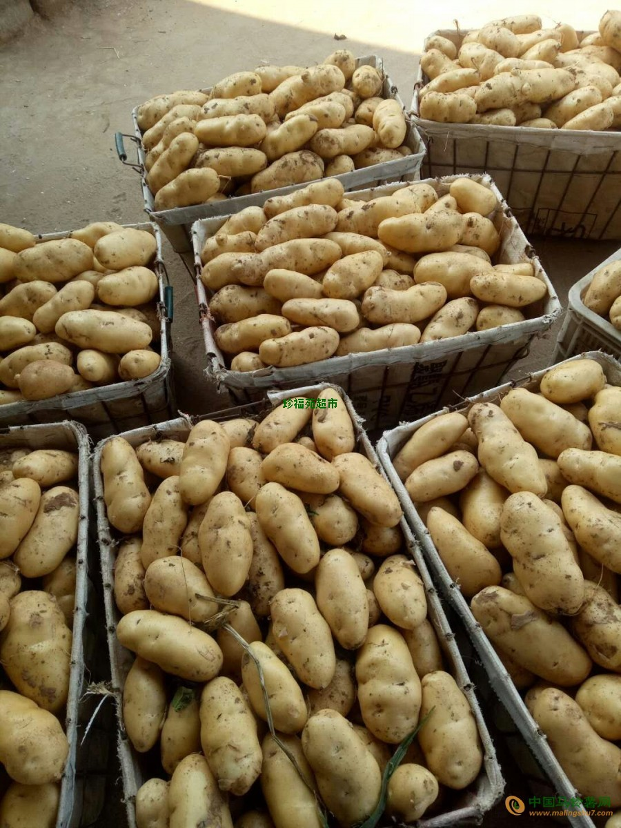 出售荷兰土豆,二两五以上 ()