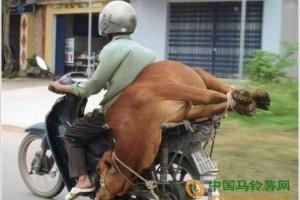 搞笑动物,勾肩搭背,世间常态,你说牛吗? ()