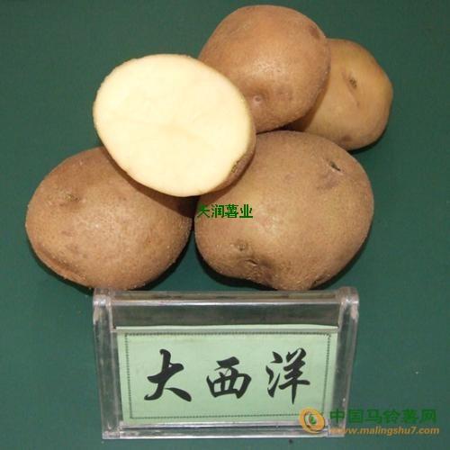 本人大量求购大西洋土豆 ()