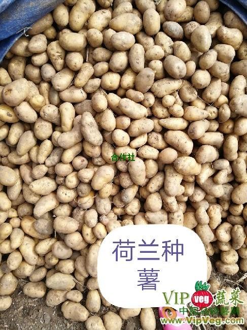 出售黑龙江土豆 ()