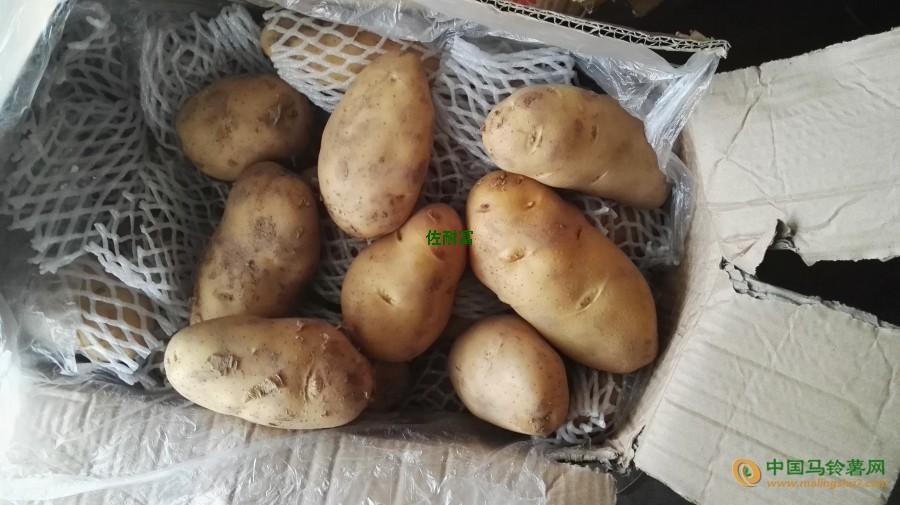 本人有大量的荷兰15土豆 ()