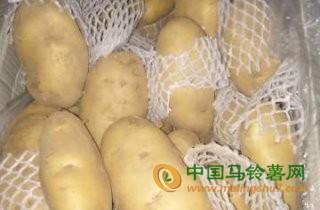 大量土豆出售 ()