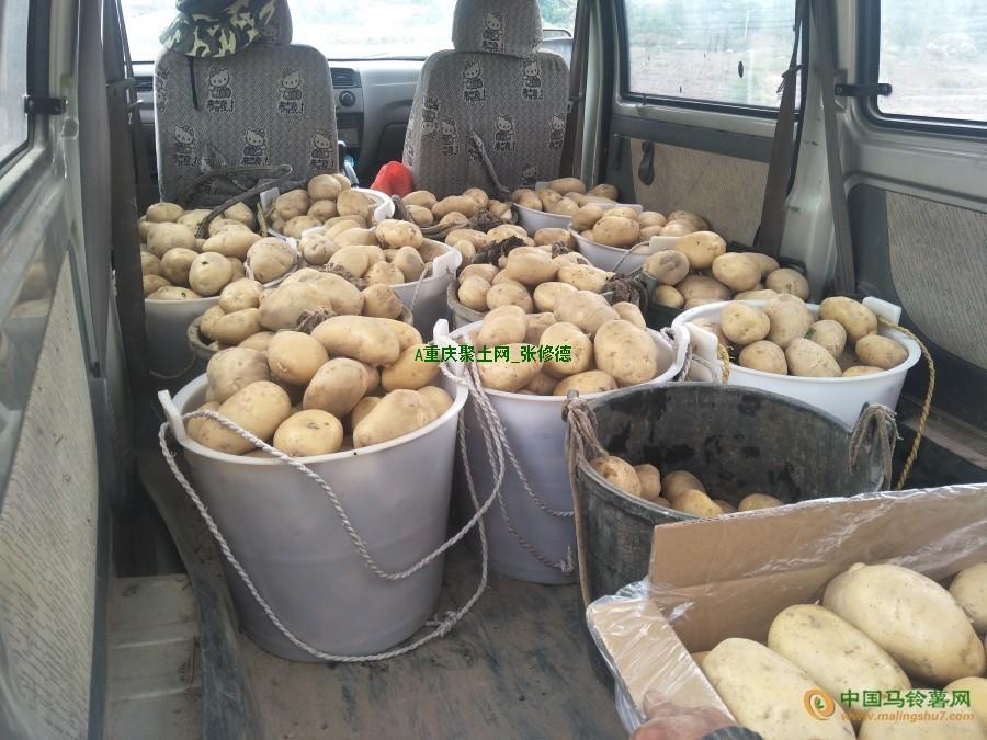 大量收购各种规格土豆 ()