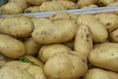 山东土豆 (0)