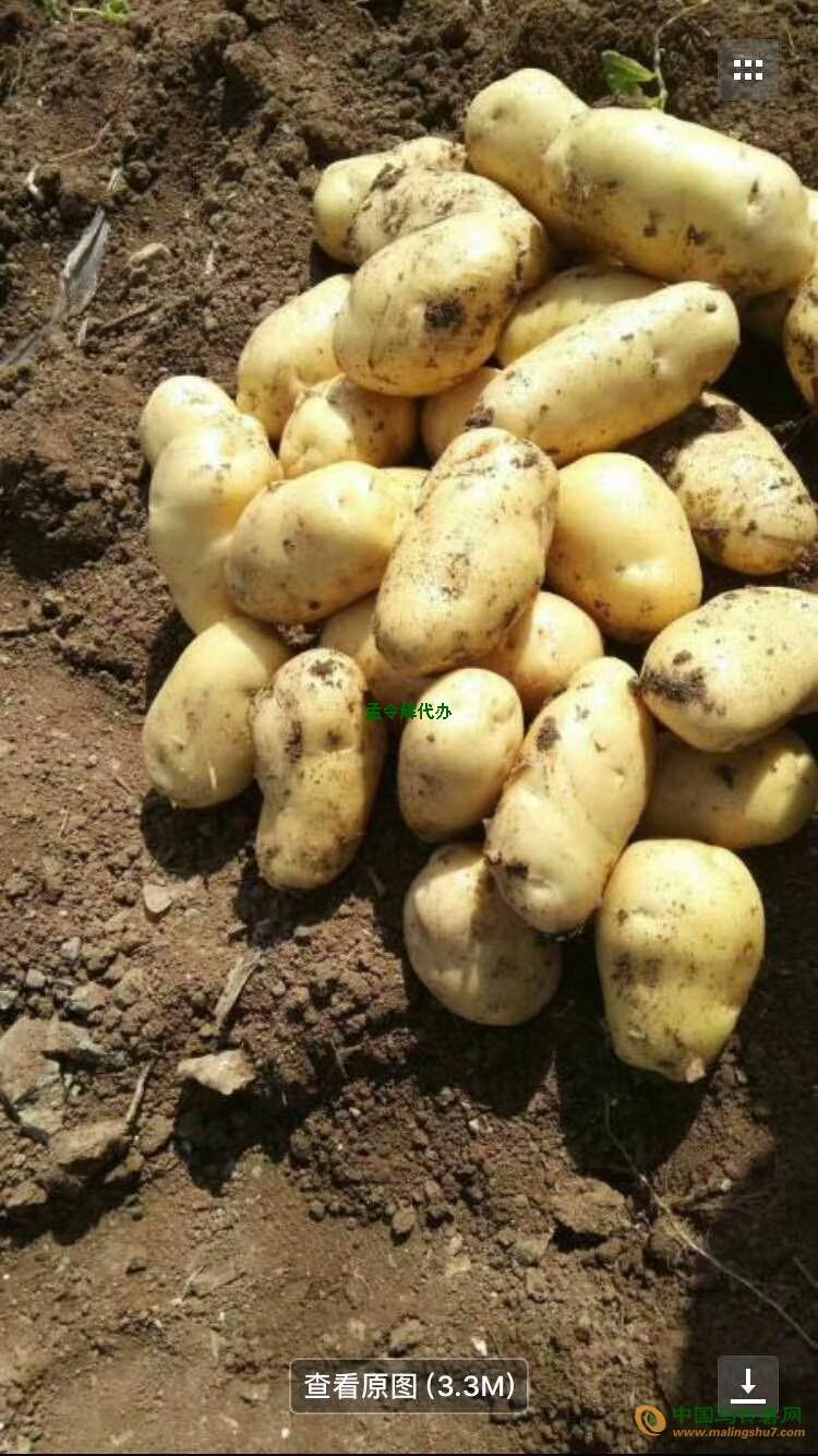 大量荷兰土豆 ()