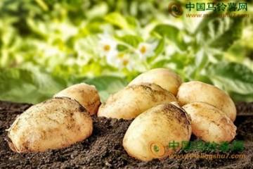 马铃薯:价格7月持续季节性下跌 ()