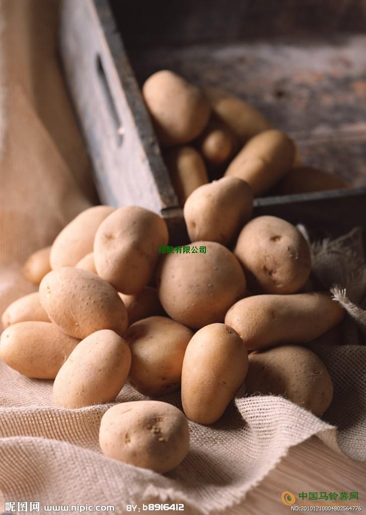 本人大量收购小土豆 ()